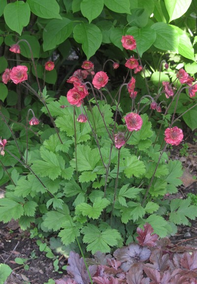 GEUM Flame of Passion